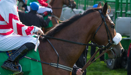 Close-up on race horse and jockey near the start gate