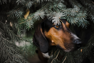 Handsome dog in tree