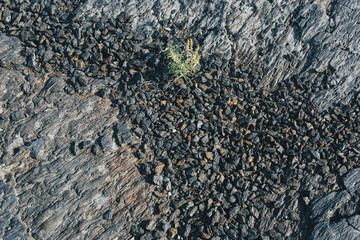 Volcanic rock from lava flow with small native plants