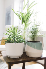 Collection of contemporary planters and greenery in bright home