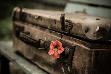 Vintage suitcase is lying on the bench. In the suitcase lock the inserted flower.