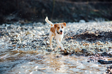 Dog running by the river