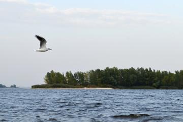 Полет чайки возле берега