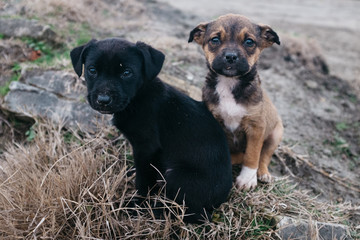 Two Cute Stray Dog Pups