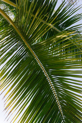 Palm front against blue sky