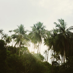 Sun shining through the palm trees