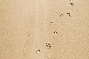 Dog footsteps