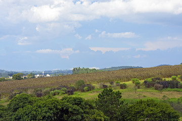 Landscape with green hill, forest and plantation on background