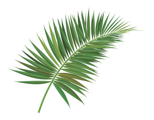 palm tree  branch vector