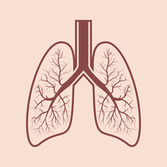 Human lung anatomy. Respiratory system graphics. Vector illustration.
