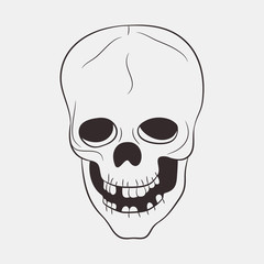 Skull human with a lower jaw and teeth. Hand drawn vector illustration.