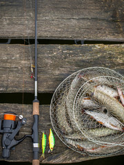 Pike and small fry with a fishing tackle by the nature on a wooden pier. A catch in a cage