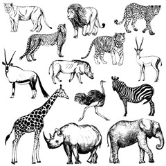 Set of hand drawn sketch style African animals and tiger. Vector illustration isolated on white background.