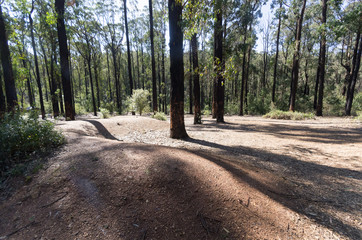 Forest clearing Kinglake