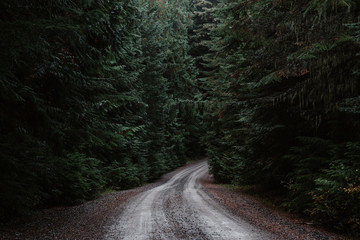 Narrow gravel road through thick forest