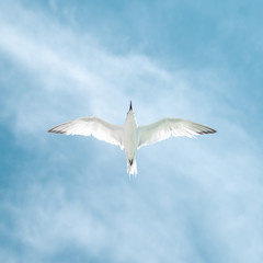 Seagull from Below