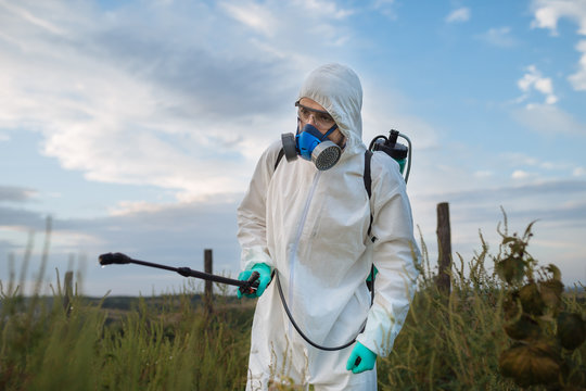 Agriculture pest control - Worker in protective workwear in weed control and spraying ambrosia on field.