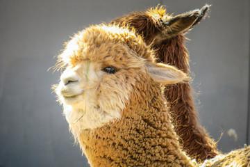 Visiting Arequipa in Peru