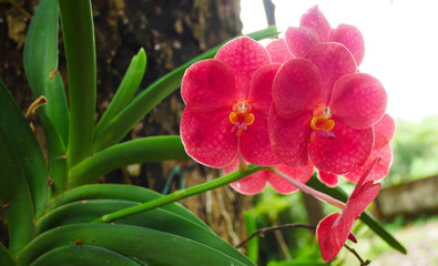 Red orchid with green leaf nature