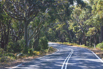 Road winding through Eucalypt forest near Garie beach in the Royal National Park, NSW, Australia
