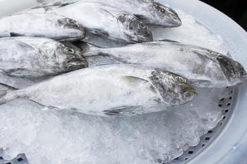 Fresh fish,(Black-banded trevally)