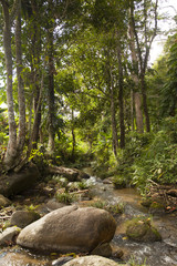stream in the heart of the green forest