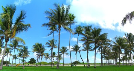 Tropical palm tree panorama  from Miami Beach