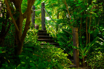 Old wooden bridge in tropical jungle. Crossing in the rainforest