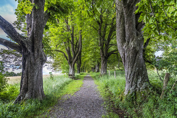 Kastanienallee in Iffeldorf in Oberbayern rauf zur Heuwinklkapelle