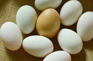 brown and white egg arranging on sackcloth