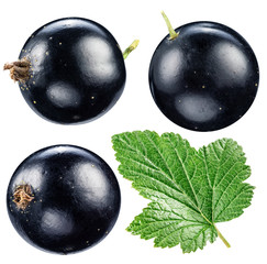 Black currant on the white background.