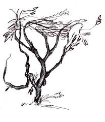 instant sketch, branchy tree
