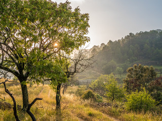 Wild grapes tree in sunset light and rain. Spanish country side hills.