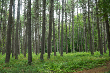 green forest and tree trunks in summer