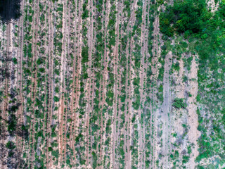 Drought Farm from Top view aerial photography