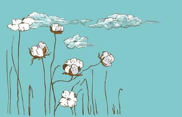 Gossypium, cotton flowers turn into light clouds