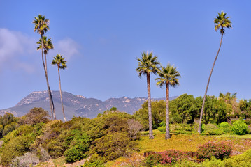 Sunny California landscape with palm trees, mountains background