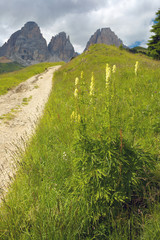 Way in Dolomites with Grohmannspitze peaks on the background, Italy
