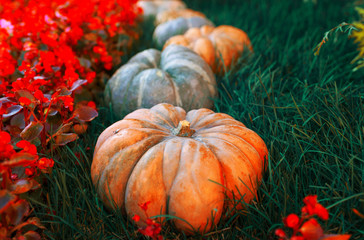 Diverse assortment of pumpkins on a wooden background. Autumn harvest.  Toned