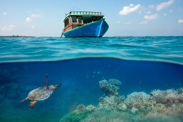Sea turtle under a boat in a coral reef