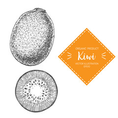 Kiwi vector illustration. Hand-drawn design element. A fruit drawn in vintage style