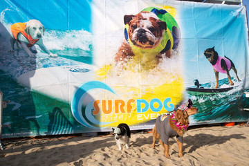 Dogs pose for photos at the Surf City Surf Dog contest in Huntington Beach