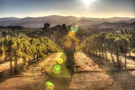 Sunrise Vineyard Landscape in Lake County, California