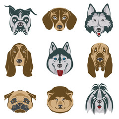 collection of various dog heads