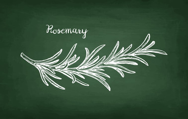 Chalk sketch of rosemary branch