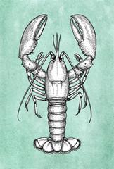 Lobster ink sketch on old paper.
