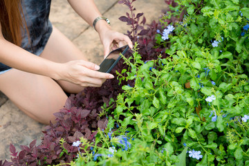 woman taking a picture with her mobile to some plants