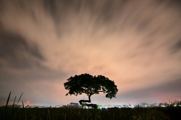 tree scenery photo