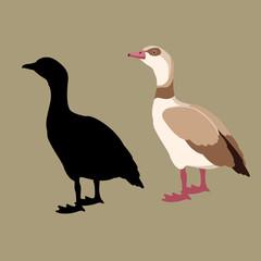 egyptian goose vector illustration style flat black silhouette