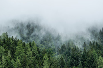 Forest in mist, low clouds in conifers, Austrian alps